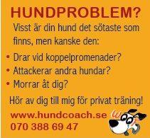 hundcoach annons Sunne